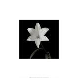 Flower Series VI
