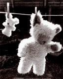 Teddy Bear Drying