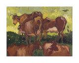 Cows  c1890