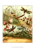 Dragonfly Gathering I