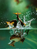Frog under Water