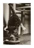 Cat Tipsy