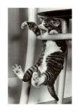 Cat Krazy