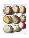 Various Apples  1758