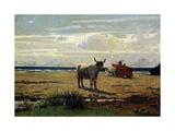 Oxen on Beach