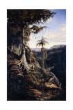 Jala-Jala Forest