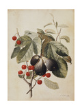 Figs and Cherries  1747