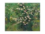 Roses  1889