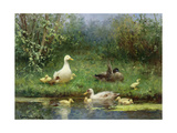 Ducks on a Riverbank