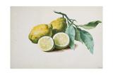 Lemons  1840