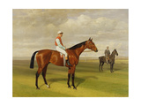 Isinglass'  Winner of the 1893 Derby  1893