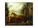 The Chestnut Arabian of Hampton Court  C1726