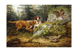 Flushed: Ruffed Grouse Shooting  1857