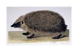 The Hedgehog  1761-1766