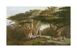 The Cedars of Lebanon  1861