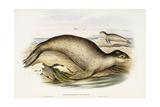 Sea Leopard