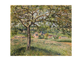 Apple Tree in Eragny  1884