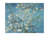 Almond Blossom, 1890 Giclée par Vincent Van Gogh