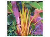 Palm Impressions 03