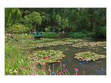 Claude Monet's Water Garden in Giverny  Department of Eure  Upper Normandy  France