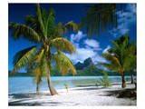 Beach on Bora Bora  Island of Tahiti  French Polynesia  The South Seas