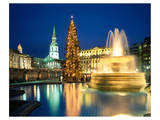 Christmas tree at Trafalgar Square  London  South England  Great Britain
