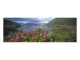 Landscape in Killarney National Park  County Kerry  Munster  Ireland