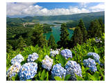Hortensias and Lagoa Verde and Lagoa Azul  Sete Cidades  Sao Miguel Island  Azores  Portugal