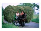 Hay transport  Great Hungarian Plain  Hungary