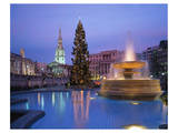Christmas tree at Trafalgar Square  London  England  United Kingdom of Great Britain