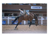 Rodeo at Calgary Stampede  Calgary  Alberta  Canada