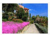 Path at Hanbury Botanic Gardens near Ventimiglia  Province of Imperia  Liguria  Italy