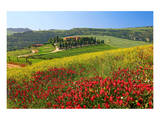 Landscape near San Quirico d'Orcia  Val d'Orca  Province of Siena  Tuscany  Italy
