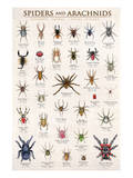 Spiders and Arachnids Reproduction d'art