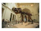 Tyrannosaurus Rex (Sue)  Field Museum in Chicago  Illinois  USA