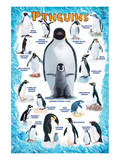 Penguins for Kids