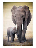Elephant and Baby
