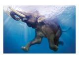 Elephant Underwater
