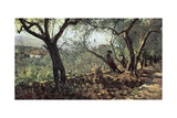 Among Olive Trees in Settignano  1881