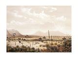 Kangaroo Hunting Near Port Lincoln  Circa 1846