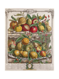 April  from 'Twelve Months of Fruits'  by Robert Furber