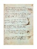 Codex on the Flight of Birds