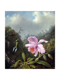 Still Life with Orchid and Pair of Hummingbirds  C1890S