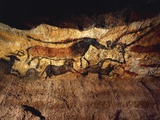 France  Vezere Valley  Images of Animals  Wall Painting in Lascaux Cave