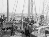 Unloading Oyster Luggers  Baltimore  Maryland  1905