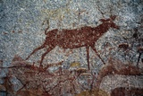 Animal Figure  Bushman or San Cave Paintings  Nswatugi Cave  Matobo Hills