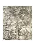 Inhabitants of Cape Verde Making Drinks from Palm Trees  Engraving from Universal Cosmology