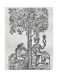 Nana Fruit  Tropical Medicinal Plant  Engraving from Universal Cosmology
