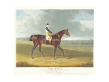 Filho Da Puta'  the Winner of the Great St Leger at Doncaster  1815