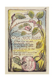 The Sick Rose'  Plate 48 from 'Songs of Innocence and of Experience' [Bentley 39] C1789-94